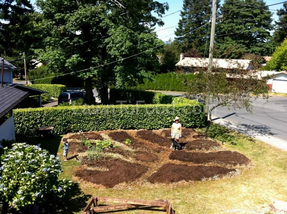 frontyard beginning