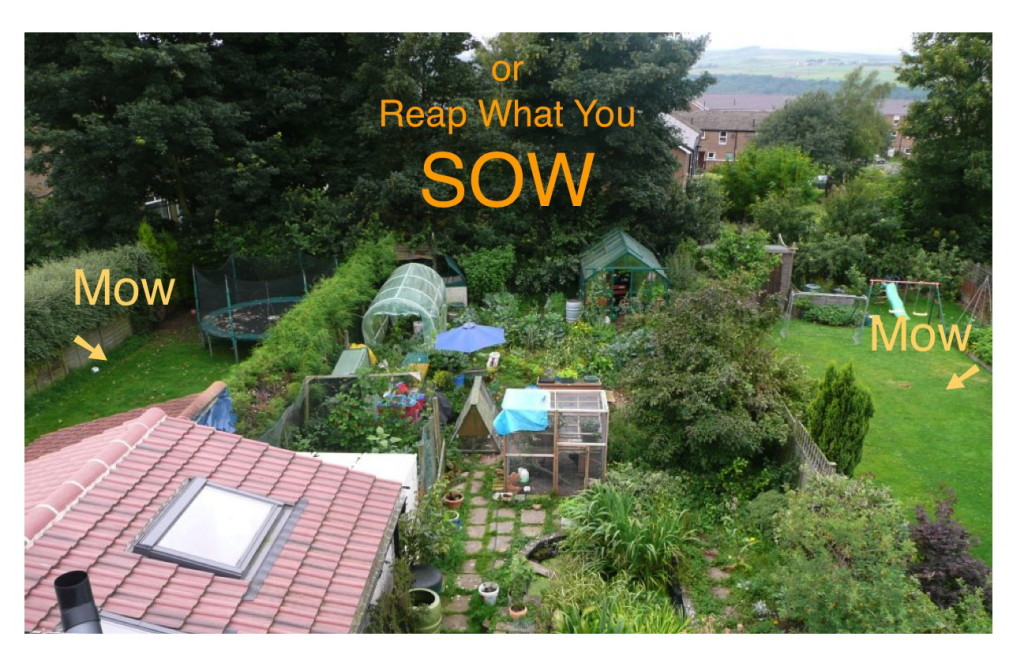 sow not mow