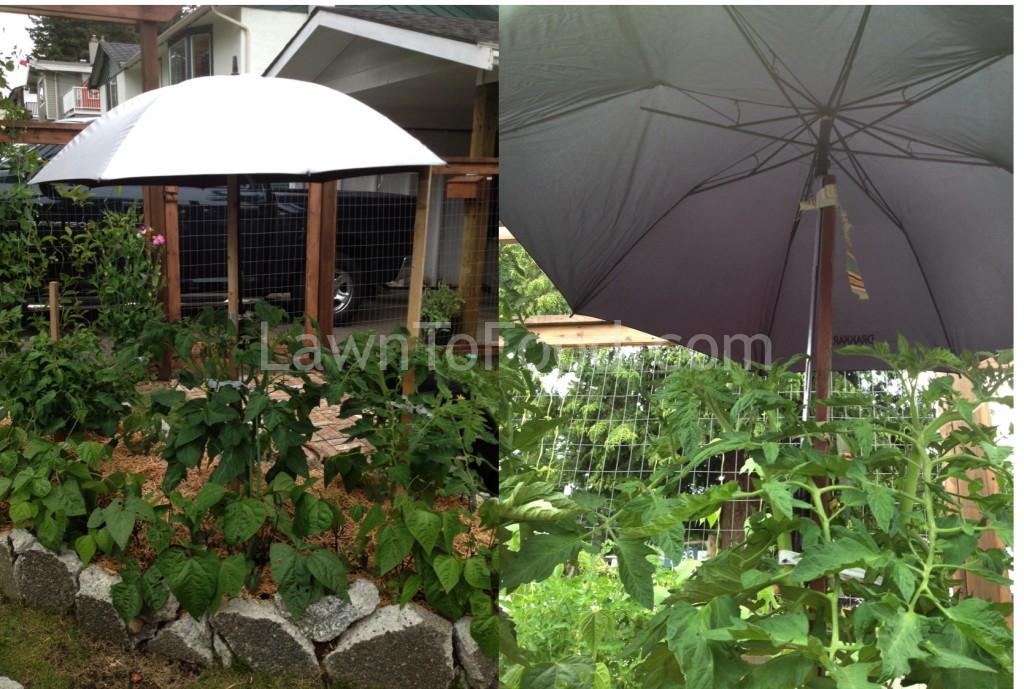 tomato-umbrella