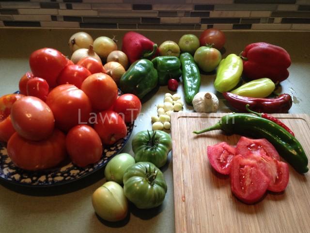 salsa harvest