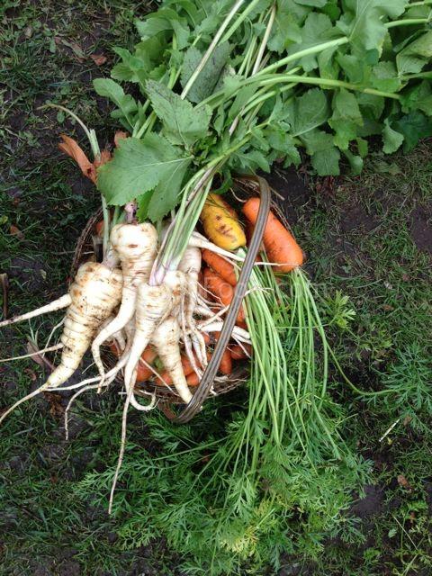 parsnips & carrots