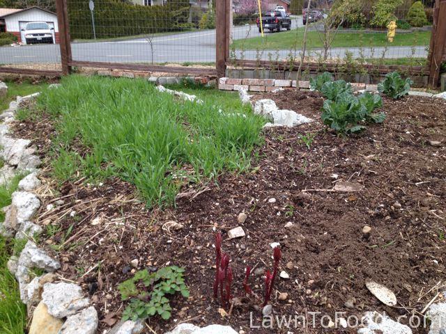 3 tomato plot