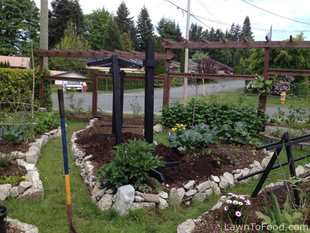 9 tomato plot